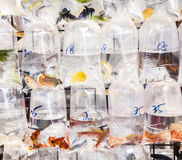 Bags with tropical fishes for sale Stock Image