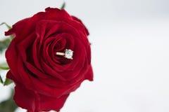 Bague à diamant maintenue dans la rose de rouge Image libre de droits