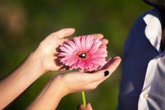 Bague de fiançailles sur une fleur Photos libres de droits