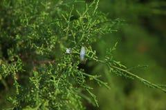 Bagues de fiançailles en nature, fond vert Histoire d'amour Anneaux de mariage sur un beau fond de branche de feuille Photos libres de droits
