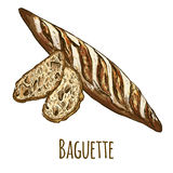 Baguette with bread slices. Full color hand drawn vector illustration Royalty Free Stock Photo
