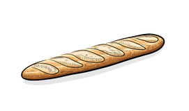 Baguette. A hand drawn vector illustration of a Baguette bread, the main sketch, colors, and background shadow are on their own separate groups for easy editing royalty free illustration