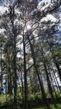 Baguio park Zdjęcia Stock
