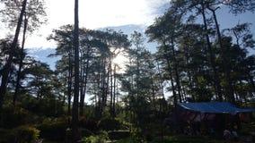 Baguio sosny obraz royalty free