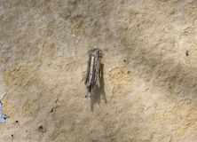Bagworm casta психик на стене Стоковые Фотографии RF