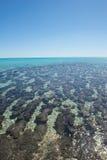 Bahía Australia del tiburón de Stromatolites Imagen de archivo libre de regalías