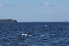 Bahía de Amur vladivostok Primorsky, región, Rusia Foto de archivo libre de regalías