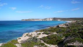 Bahía de los leones de mar Foto de archivo