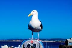 Bahía de Monterey Imagen de archivo