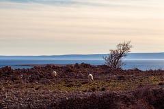Bahía de Stara Baska en krk Imagen de archivo libre de regalías