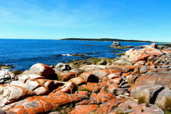 Bahía del esqueleto de Tasmania de la costa este fotografía de archivo libre de regalías