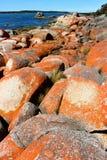 Bahía del esqueleto de Tasmania de la costa este foto de archivo