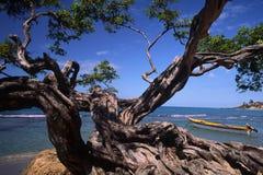 Bahía del fugitivo de Jamaica Imágenes de archivo libres de regalías