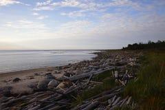 Bahía del haz de madera desechado Foto de archivo