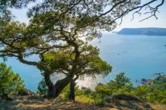 Bahía del Mar Negro y árbol de pino en las montañas crimeas Fotografía de archivo libre de regalías