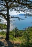 Bahía del Mar Negro y árbol de pino en las montañas crimeas Imagen de archivo