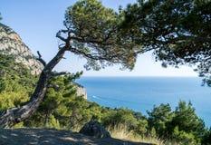 Bahía del Mar Negro y árbol de pino en las montañas crimeas Fotos de archivo libres de regalías