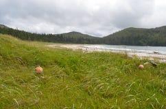 Bahía del modo -- Cabo Scott Provincial Park Imágenes de archivo libres de regalías