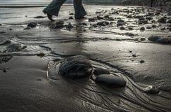 Bahía del ` s de Robin Hood, piedras en una playa fotos de archivo libres de regalías