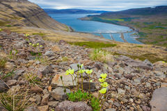Bahía del sello, de Westfjords, Islandia imágenes de archivo libres de regalías