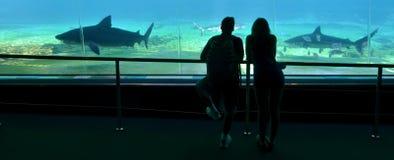 Bahía del tiburón en el mundo Gold Coast Queensland Australia del mar Imagenes de archivo