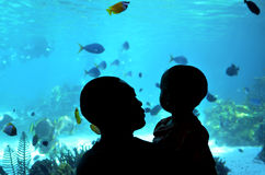 Bahía del tiburón en el mundo Gold Coast Queensland Australia del mar Imágenes de archivo libres de regalías