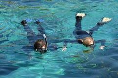 Bahía del tiburón en el mundo Gold Coast Queensland Australia del mar Imagen de archivo libre de regalías