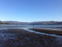 Bahía hermosa para la cosecha del berberecho Imagen de archivo libre de regalías