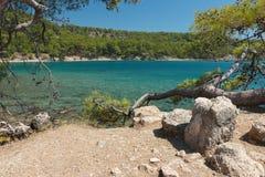 Bahía hermosa, playa rocosa y pinos. Imagen de archivo libre de regalías