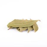 Bahía, laurel, hojas, Foto de archivo libre de regalías
