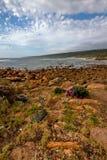 Bahía rocosa con las flores salvajes en primero plano imágenes de archivo libres de regalías