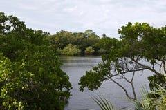 Bahía a través de los árboles fotos de archivo