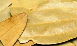 Bahía u hojas o tejpata del cinnamn Fotos de archivo libres de regalías