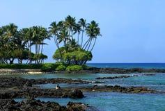 Bahía y tortuga de Anaehoomalu Imágenes de archivo libres de regalías