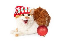 Bah Humbug Angry Cat Royalty Free Stock Photography