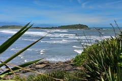 Bahía escénica de Tauranga de la colonia de sello en nuevo Zealandz Imagenes de archivo