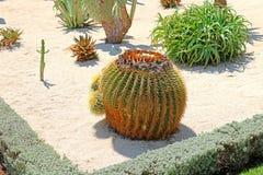 Bahai庭院在被分离的设备嵌入包括区域用仙人掌,丝兰和龙舌兰,生长 免版税库存图片