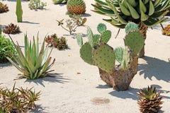Bahai庭院在被分离的设备嵌入包括区域用仙人掌,丝兰和龙舌兰,生长 免版税图库摄影