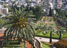 The Bahai gardens Royalty Free Stock Images