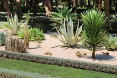The Bahai Gardens include areas with cactuses, yuccas and agaves, growing in separated plant beds Stock Photos