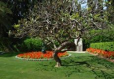 Bahai temple gardens,Haifa,Israel Stock Photos