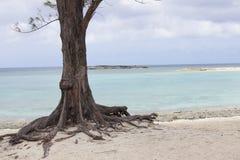 Bahama ö Arkivbild