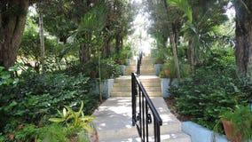 Bahama-Garten Stockfotos
