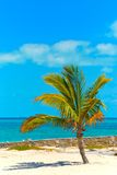Bahamas beach and palm tree Royalty Free Stock Photo