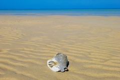 Bahamas beach and shells Royalty Free Stock Photos