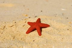 Bahamas beach and star Royalty Free Stock Photography