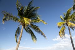 Bahamas, Cable Beach. Bahamas, the golden sands of Cable Beach stock photos
