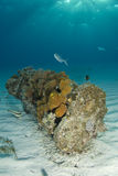 Bahamas Encrusted Wreckage. Sun beams shine down from the surface of hte ocean onto a coral encrusted piece of wreckage on the ocean floor Stock Photo