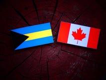 Bahamas flagga med den kanadensiska flaggan på en isolerad trädstubbe Arkivfoto
