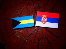 Bahamas flagga med den serbiska flaggan på en trädstubbe Fotografering för Bildbyråer